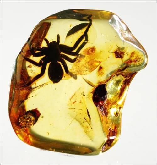 Hình4: Hổ phách Baltic, với bao thể là 1 chú nhện rất to bị nhốt bên trong